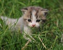 1 Baby Cat Kitty In Green Grass Stock Photo