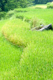 1 bamei около села террас риса Стоковые Фото