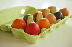 (1) barwionych jajek highty tighty Obraz Stock