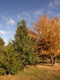 1 barwy jesieni Obraz Stock