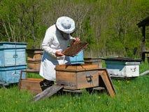 1 beekeeper Fotografering för Bildbyråer