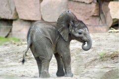 1 behandla som ett barn elefanten Arkivfoton