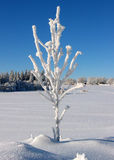 1 big frosted twig Stock Photo