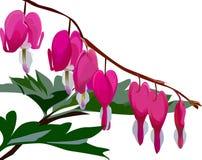 1 blomma royaltyfri illustrationer