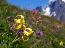 1 blommaberg Royaltyfri Fotografi