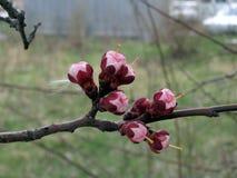 1 blomning Royaltyfria Bilder