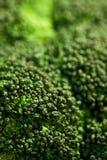 (1) brokuły fotografia stock
