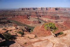 (1) canyonlands Fotografia Stock