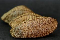 1 castanheiro gör para arkivfoton