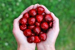 1 Cherryhand Arkivbild