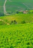1 chinati ingen vingård Arkivbilder