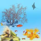 1 coralreef Arkivfoton