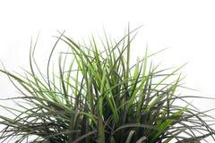 1 correction d'herbe Photos stock