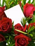 1 czerwone róże Obraz Royalty Free
