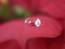 1 droppe Royaltyfri Foto