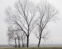 (1) drzewa Obrazy Stock