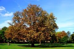 (1) drzewo Obrazy Stock