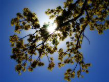 1 drzewo obrazy stock