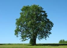 1 drzewo obraz royalty free
