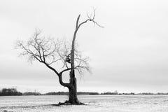 1 drzewo Zdjęcie Stock