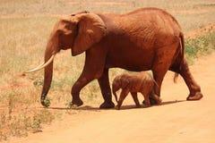 1 Elephant Beside on Baby Elephant Royalty Free Stock Photos