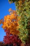 1 färgfall Fotografering för Bildbyråer