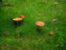 1 fairy древесина сказа glade Стоковая Фотография