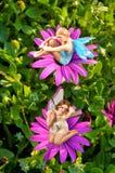 1 fairy мир Стоковое Изображение