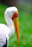 1 fakturerade storkyellow Royaltyfri Fotografi
