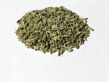 1 fennel kärnar ur Royaltyfria Bilder