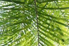 1 fern Fotografering för Bildbyråer
