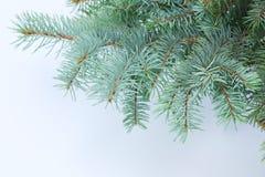 1 filialgranhorisontaltree Royaltyfri Bild