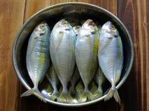 1 fisk Royaltyfri Fotografi