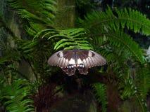 1 fjäril Arkivbild