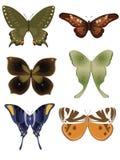 1 fjärilssamling vektor illustrationer