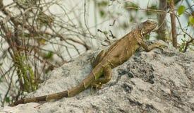 (1) Florida wpisuje serii przyrody Zdjęcie Royalty Free
