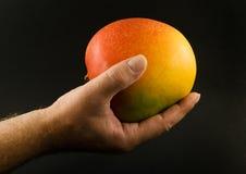 1 fruktmango Arkivbilder