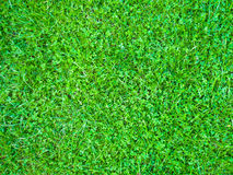 1 gräs Royaltyfria Foton