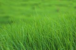 1 grasscape Arkivbild