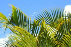 1 greenery Стоковые Изображения