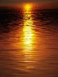 1 guld- vatten Royaltyfri Bild