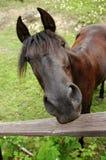 1 häst Arkivbild