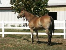 1 häst Royaltyfri Fotografi