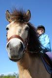 1 hästridning Royaltyfri Bild