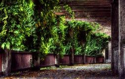1 höstträdgård Arkivfoton