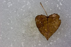 1 hearted freddo Fotografia Stock Libera da Diritti