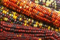 1 hindusów kukurydziany Obraz Stock