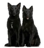 1 hundgreenland gammala sittande år Royaltyfria Foton