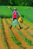 1 ingen scarecrow Royaltyfria Foton