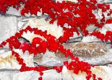 1 ingen väggwine Royaltyfri Foto